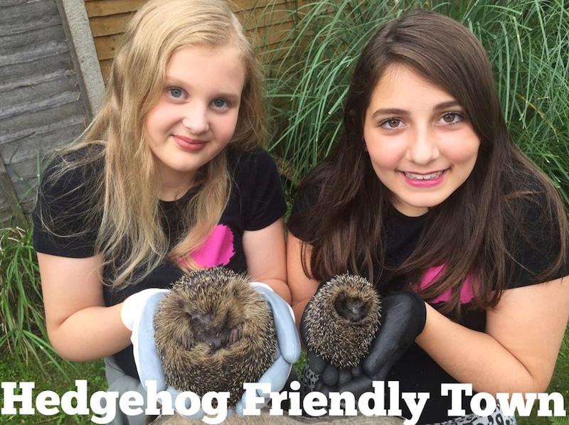 Hedgehog Friendly Town