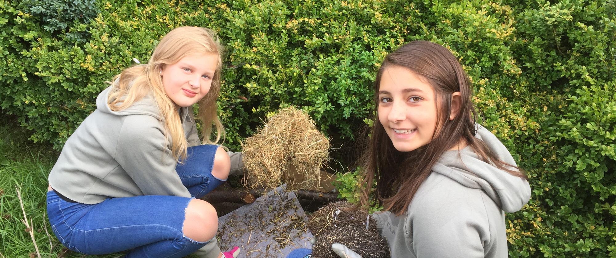 We release hedgehogs